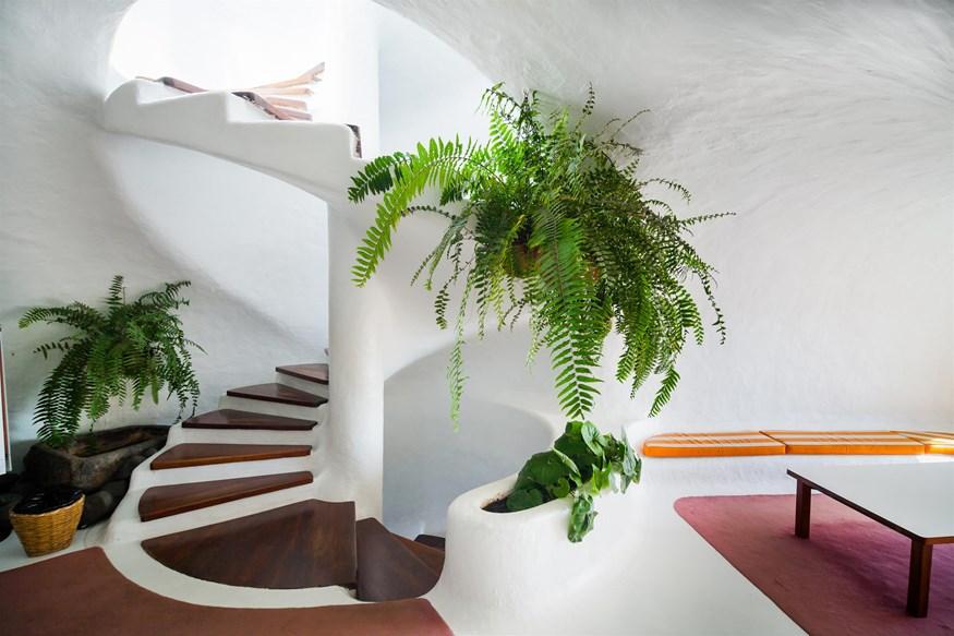 Θέλετε να διατηρήσετε τα φυτά σας καταπράσινα και ολοζώντανα; Σας έχουμε τον τρόπο!